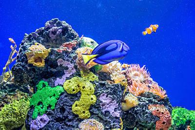 Clown Fish Photograph - Coral Reef by Steve Harrington