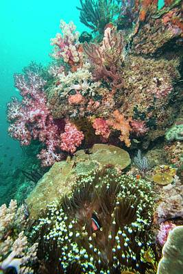Rahman Photograph - Coral Reef With An Anemonefish by Scubazoo
