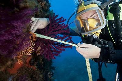 Coral Research Art Print