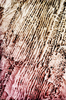 Coral Rock Close Up Art Print by Photography  By Sai