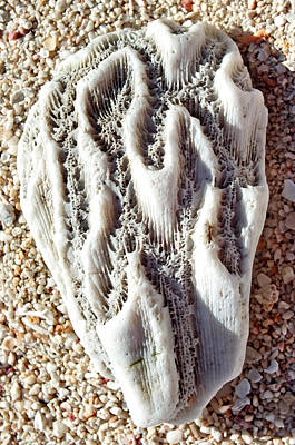 Photograph - Coral Rock Upclose 2 by Duane McCullough