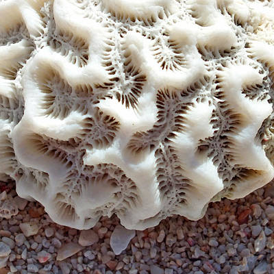 Photograph - Coral Rock Upclose 3 by Duane McCullough