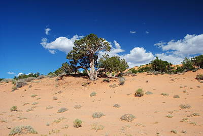 Photograph - Coral Sand Dunes Utah by Robert  Moss