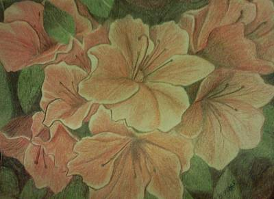 Drawing - Coral Sunburst Azaleas by Christy Saunders Church