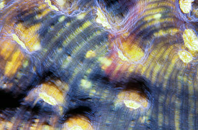 Photograph - Corals 3 by Dawn Eshelman
