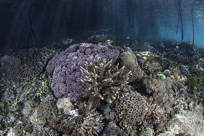 Corals Grow Along The Edge Art Print