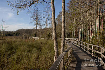 Photograph - Corkscrew Swamp Sanctuary by Meg Rousher