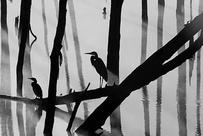 Photograph - Cormorant And The Heron  Bw by Roger Becker