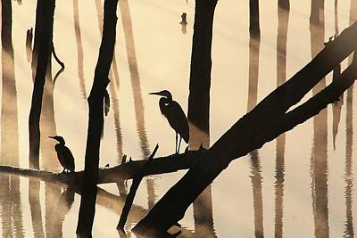Photograph - Cormorant And The Heron by Roger Becker