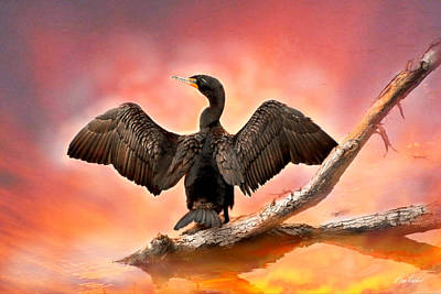 Photograph - Cormorant At Sunset by Diana Haronis