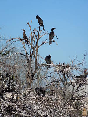 Photograph - Cormorant City by Ron Davidson
