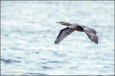 Waterfowl Photograph - Cormorant by LeeAnn McLaneGoetz McLaneGoetzStudioLLCcom