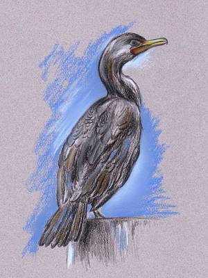 Pastel - Cormorant by MM Anderson
