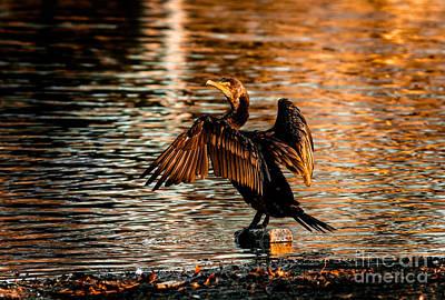Cormorant On Gold Art Print by Robert Frederick