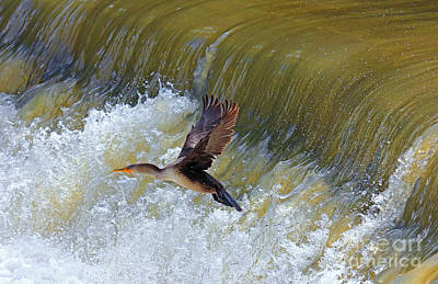 Photograph - Cormorant Over Waterfall by Charline Xia