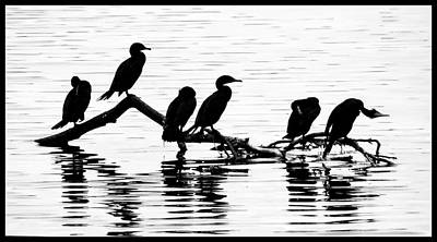 Art Print featuring the photograph Cormorant Silhouettes by Geraldine Alexander