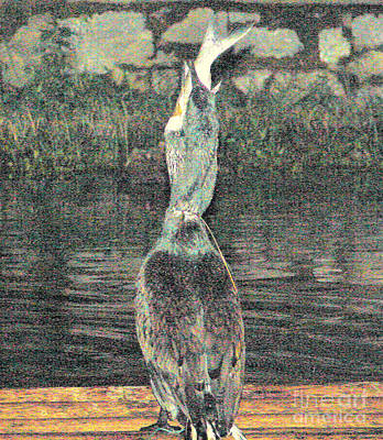 Photograph - Cormorant With Fish by John Potts