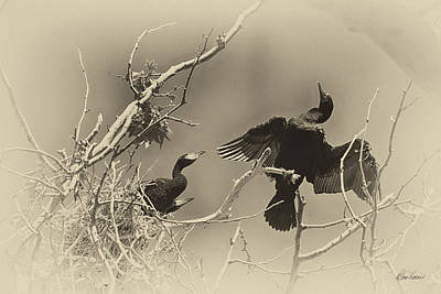 Photograph - Cormorant With Her Young by Diana Haronis