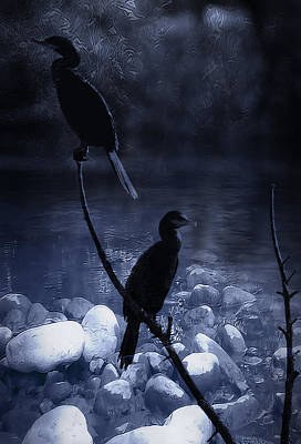 Cormorants At Dusk Print by Kelly Gibson
