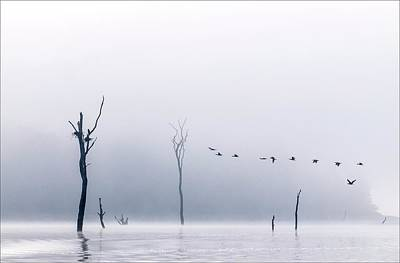 World Peace Photograph - Cormorants Flying Over Water by K Jayaram