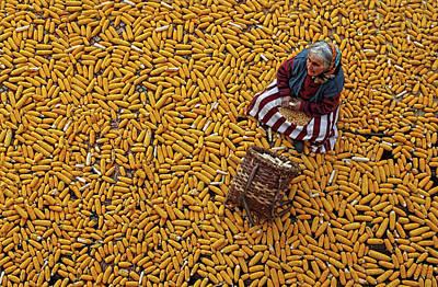 Corn Wall Art - Photograph - Corn A??a?? by Mustafa Zengin