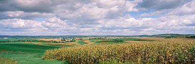 Alfalfa Photograph - Corn And Alfalfa Fields, Green County by Panoramic Images
