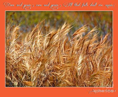 Photograph - Corn And Grain Poster By Diana Sainz by Diana Raquel Sainz