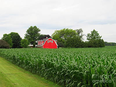 Food And Flowers Still Life - Corn And Red Barn by Tina M Wenger