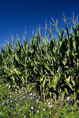 Corn And Wildflowers Art Print