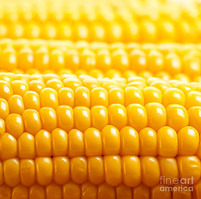 Sweet Corn Farm Photograph - Corn Background by Anna Om