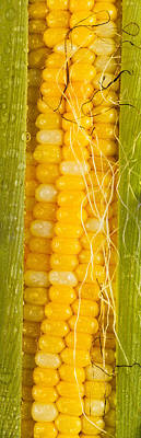 Corn Cob Silk Original