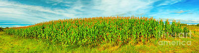Corn Crop Art Print by MotHaiBaPhoto Prints