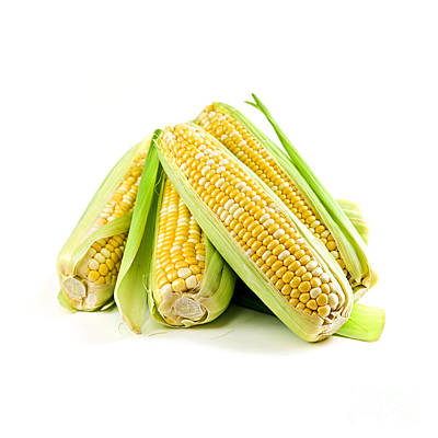 Food And Beverage Photos - Corn ears on white background by Elena Elisseeva