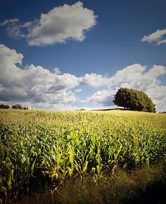 Corn Field Print by Les Cunliffe