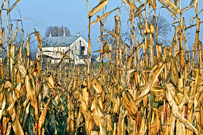 Photograph - Corn Framed Barn by Ronald Lutz