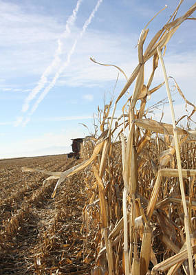 Photograph - Corn Harvest by Kristy Jeppson
