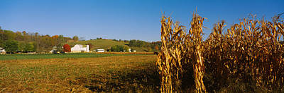 Corn In A Field After Harvest Art Print by Panoramic Images