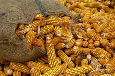 Corn Print by Ingo Schulz
