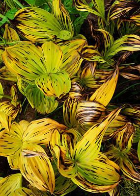 Digital Art - Corn Lilies by Kathleen Bishop