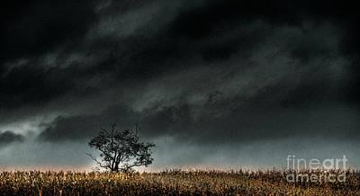 Agriculture Photograph - Corn Maze by Arne Hansen