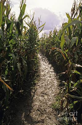 Maze Puzzle Photograph - Corn Maze by Jim Corwin