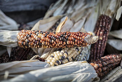 Farmstand Photograph - Corn Of Many Colors by Caitlyn  Grasso
