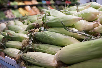 Photograph - Corn On Display At Farmers Market by Alex Grichenko