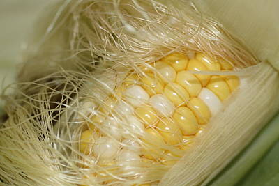 Photograph - Corn On The Cob by Donna G Smith
