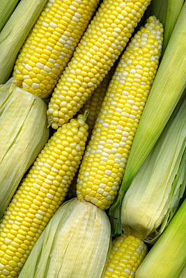 Scanography Photograph - Corn On The Cob II by Tom Mc Nemar