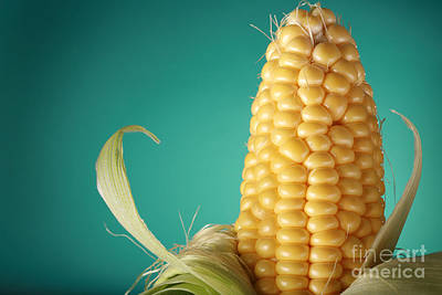 Corn On The Cob Art Print by Sharon Dominick