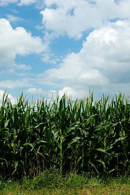 Photograph - Corn by Rhonda Barrett