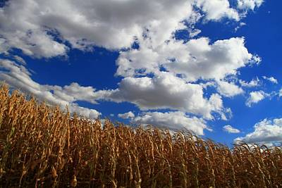 Cornfield Photograph - Corn Stalk Panorama by Dan Sproul