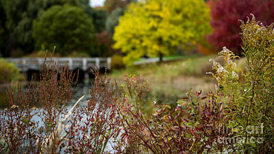 Photograph - Cornell Aboretum by Brad Marzolf Photography