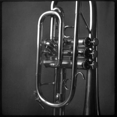 Photograph - Cornet by Christopher Rees